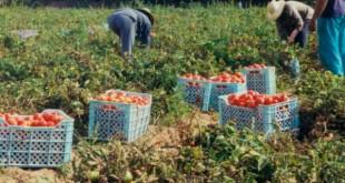 harvesting food