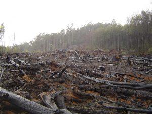 Green-brown deforestation