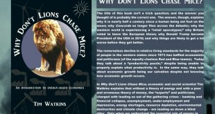 Why don't lions chase mice?